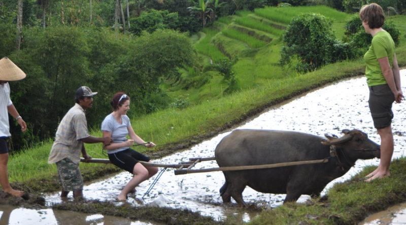 آگروتوریسم - گردشگری مزرعه